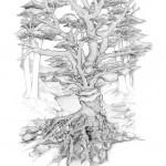 Pencil Illustration Fabulous Beast - Siegerbaum - Victory Tree