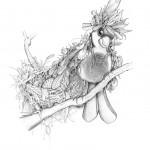 Pencil Illustration Fabulous Beast - Messy Finch