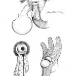 Pencil Illustration Fabulous Beast - Pfeifer - Details