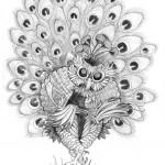 Pencil Illustration Fabulous Beast - Pfeule - Owl-Peacock