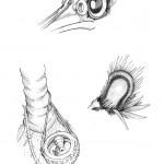 Pencil Illustration Fabulous Beast - Woodpecker - Details